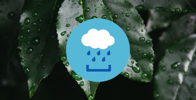 Rainwater Collection Service